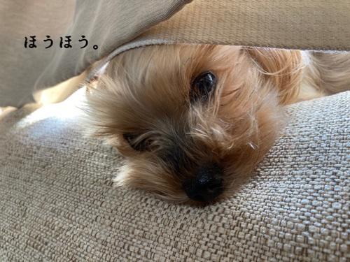 fc2blog_20201118211911bc7.jpg