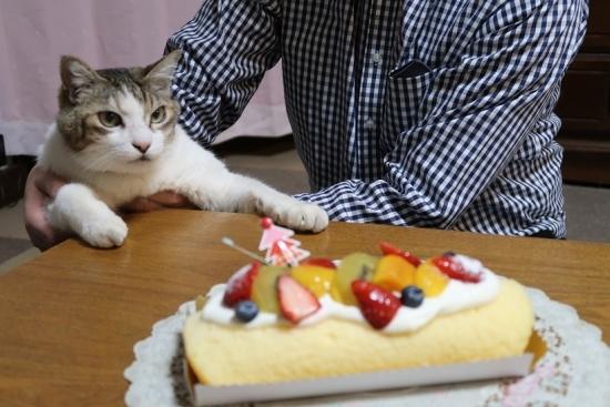 マフ太郎とケーキ