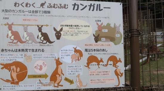 浜松市動物園 カンガルー