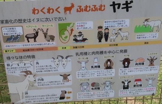 浜松市動物園 ヤギ