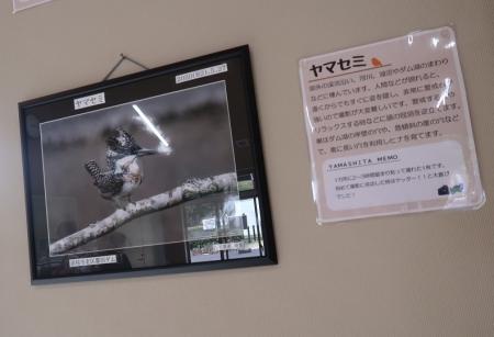 浜松市動物園 ミニ写真展 ヤマセミ