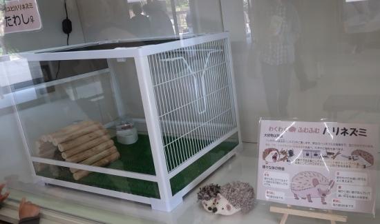 浜松市動物園 ハリネズミ