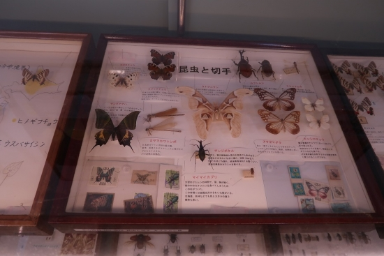 浜松市動物園 昆虫館