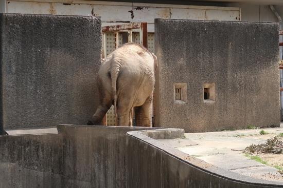 浜松市動物園 アジアゾウ