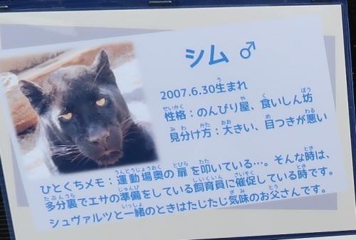浜松市動物園 クロヒョウ どよんちゃん