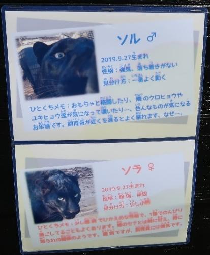 浜松市動物園 クロヒョウ