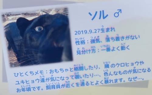 浜松市動物園 クロヒョウ 魔獣ソル