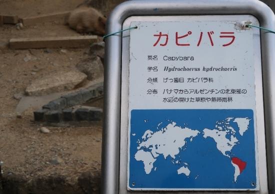 浜松市動物園 カピバラ