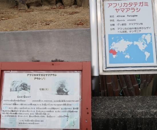 浜松市動物園 アフリカタテガミヤマアラシ