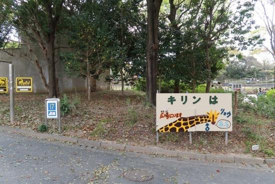 浜松市動物園 キリン