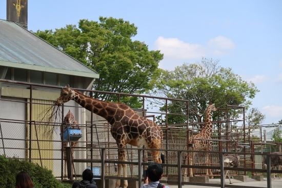 浜松市動物園 キリンとダチョウ
