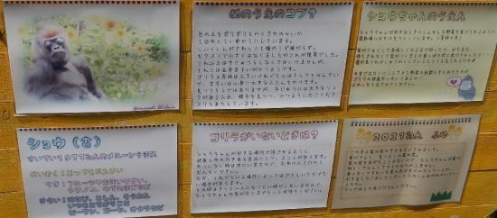 浜松市動物園 ゴリラ