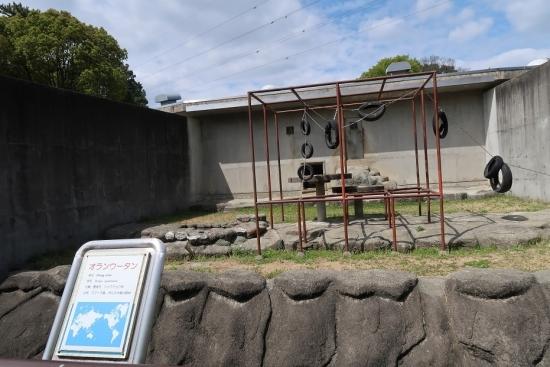 浜松市動物園 オランウータン