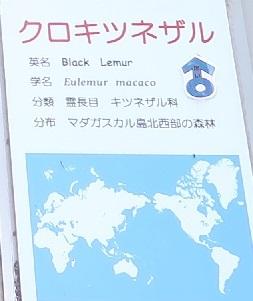 浜松市動物園 クロキツネザル
