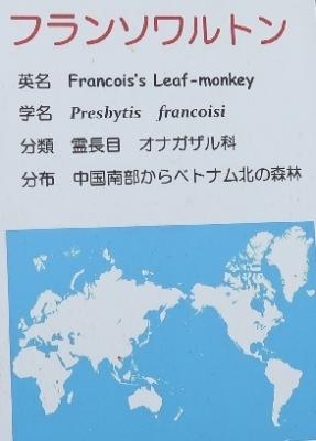 浜松市動物園 フランソワルトン
