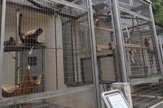 浜松市動物園 ジェフロイクモザル