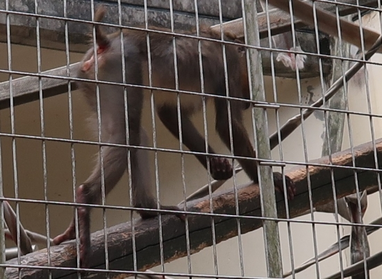 浜松市動物園 マンドリル