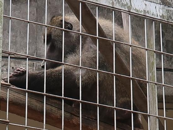 浜松市動物園 ドグエラヒヒ