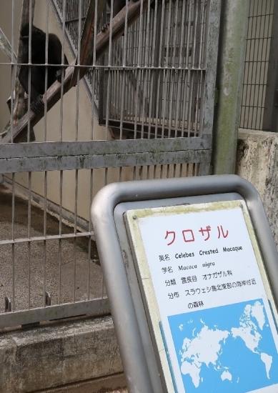 浜松市動物園 クロザル