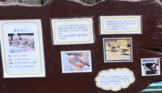 浜松市動物園 オシドリなど