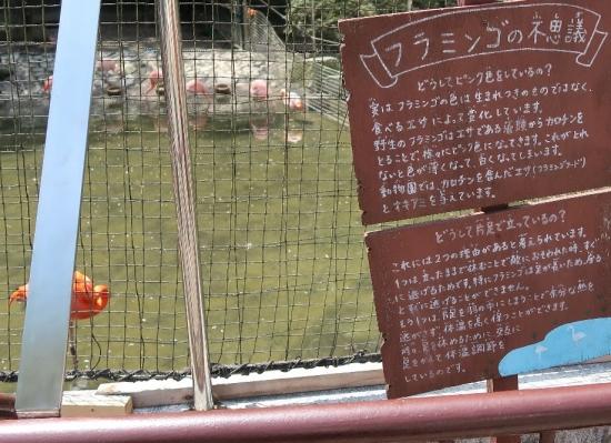 浜松市動物園 フラミンゴ