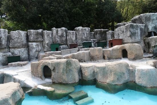 浜松市動物園 フンボルトペンギン
