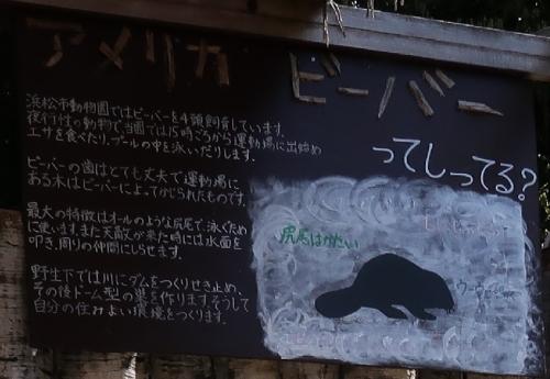 浜松市動物園 ビーバー