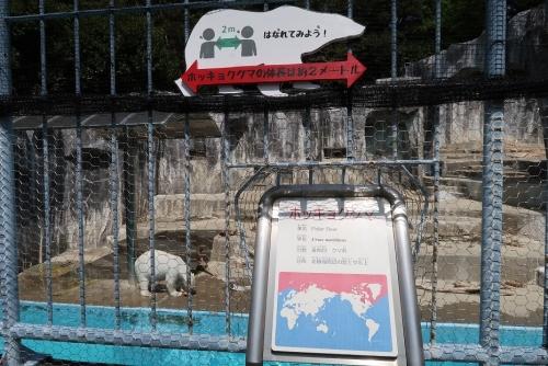 浜松市動物園 ホッキョクグマ