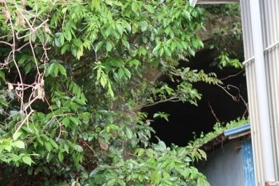 浜松市天竜区 トンネル跡