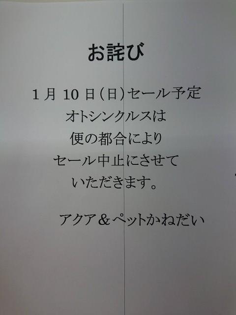 2101088.jpg