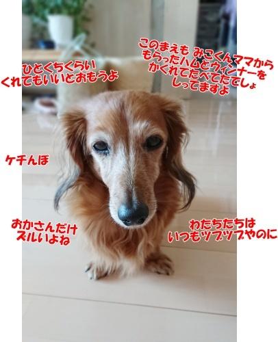 DSC_4766_20201020212745db0.jpg