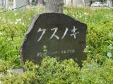 名鉄青山駅 クスノキ 石碑