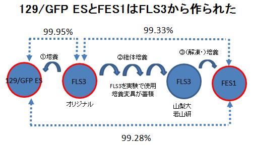FES1と129GFP ES