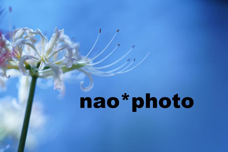 DSC03824yu666.jpg