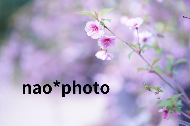 DSC07138tg.jpg