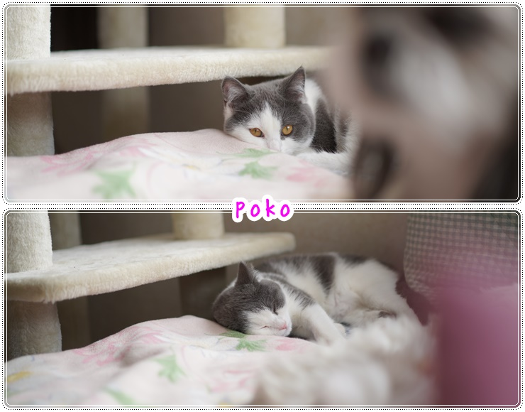 catsyy_20210314191728d60.jpg