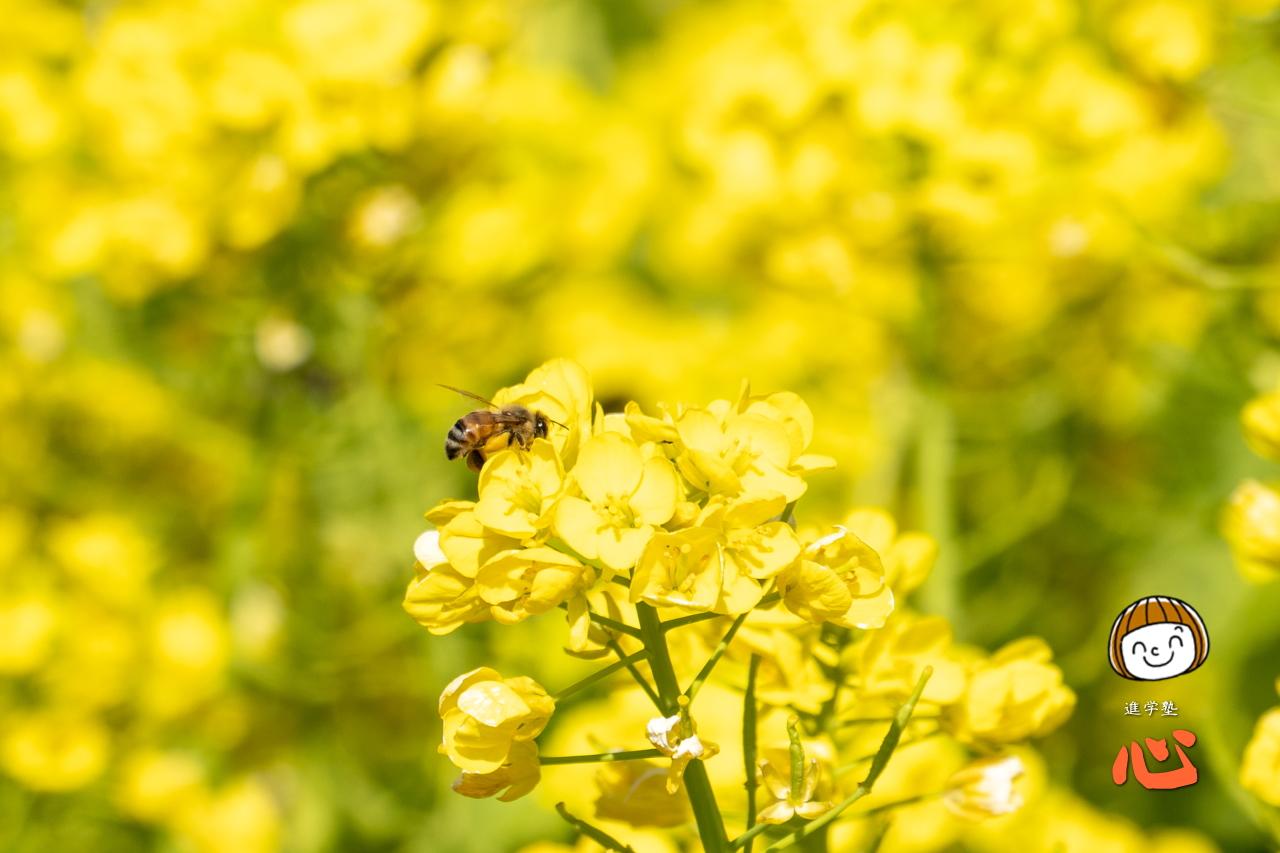 0222ミツバチ