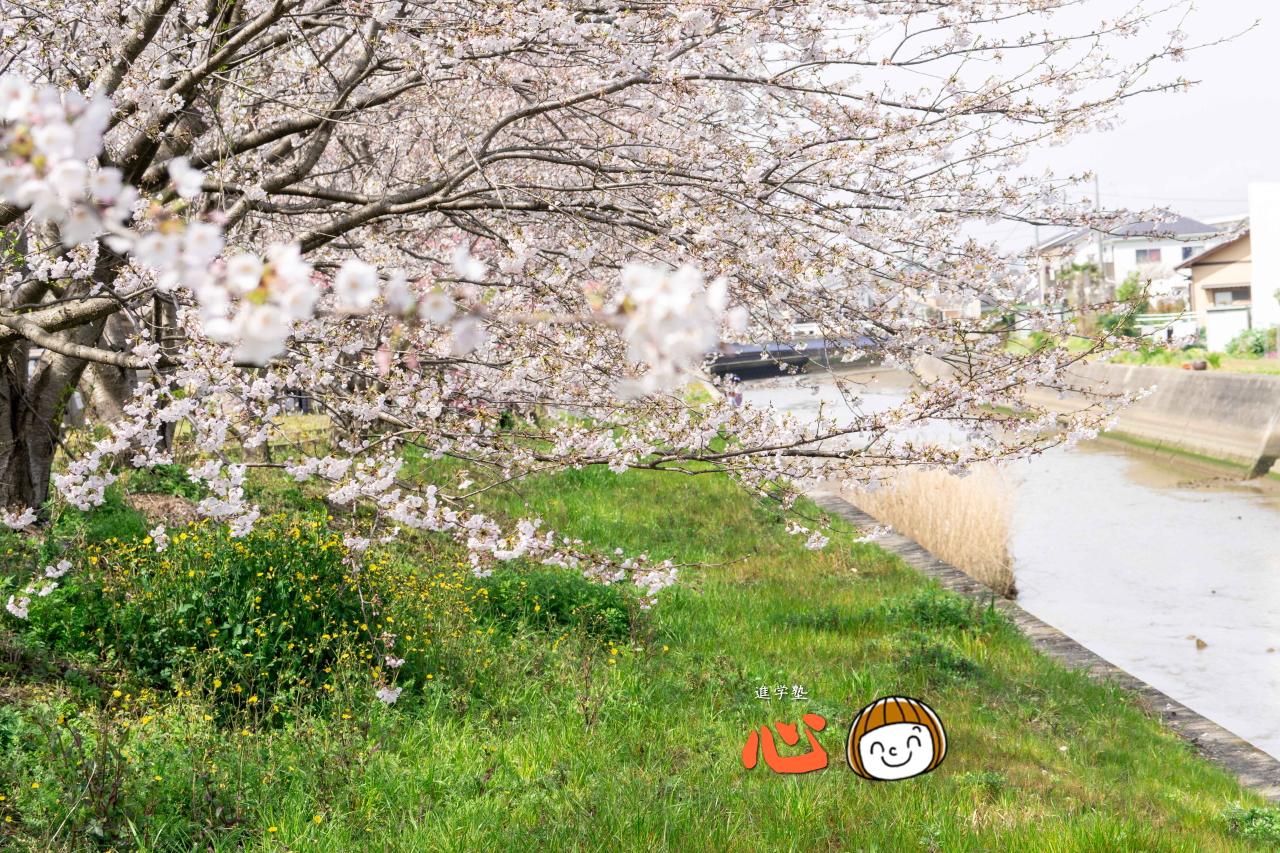 0329桜⑤