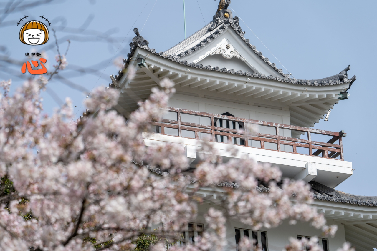 0330白と桜