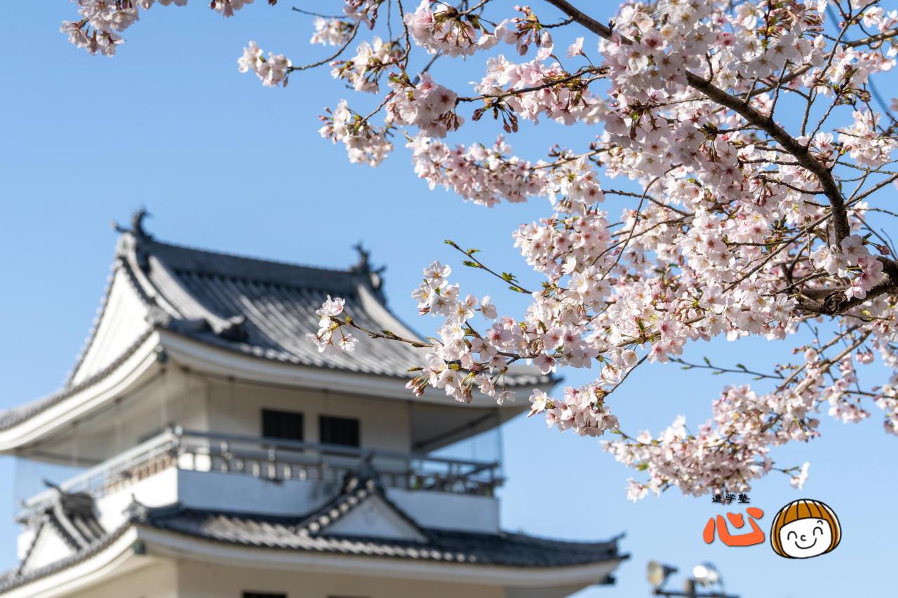 0331桜と城