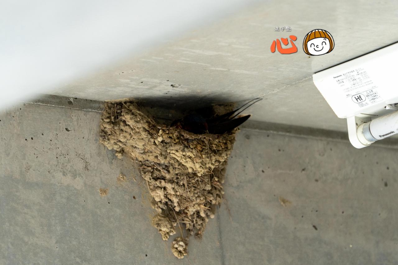 0511ツバメの巣