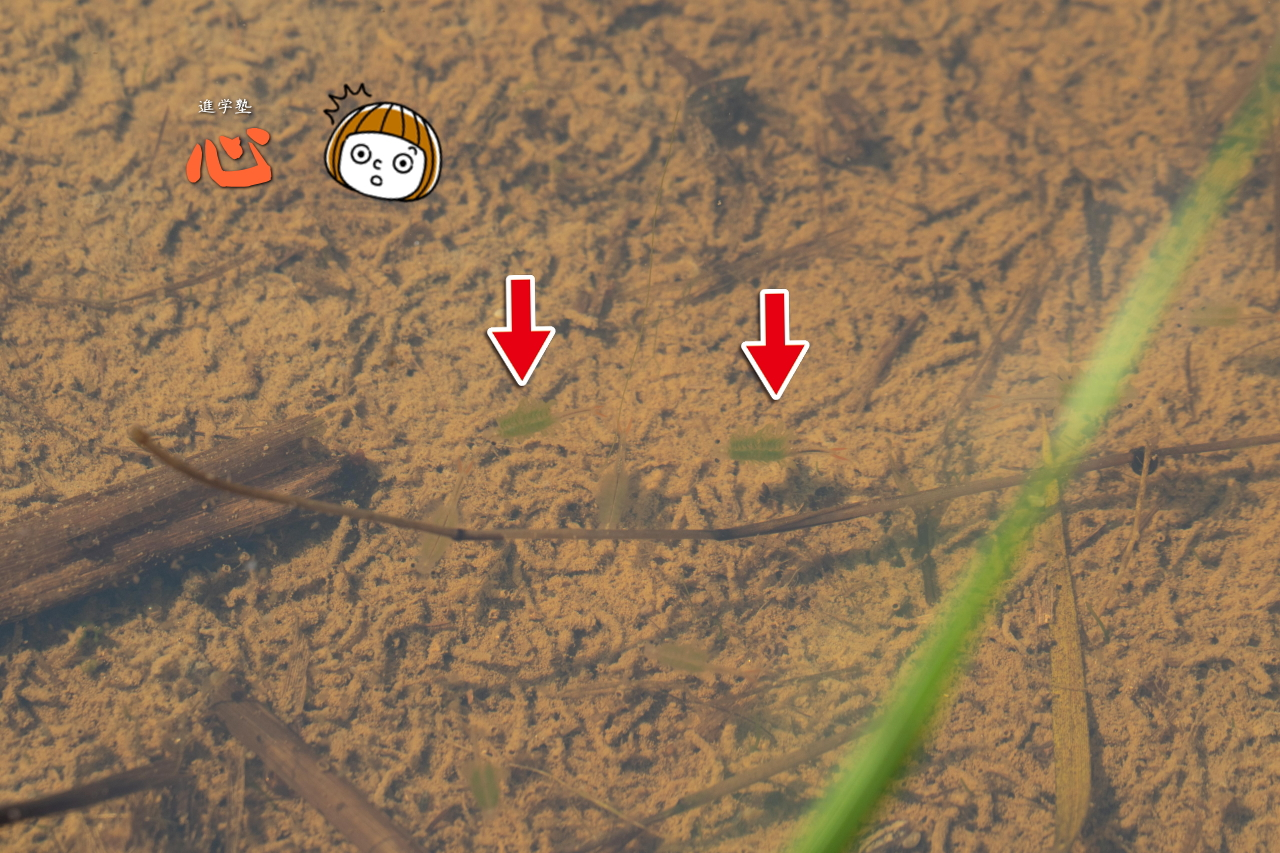0609田んぼにいた意味不明な生物