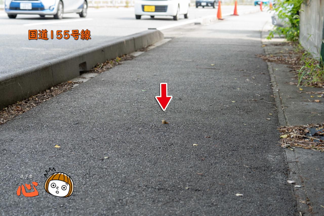 0723国道沿いのカタツムリ