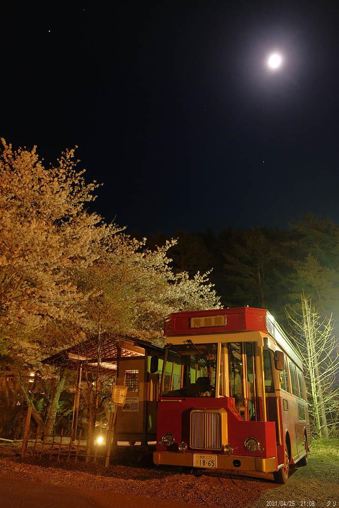 20210425-5 夜桜月