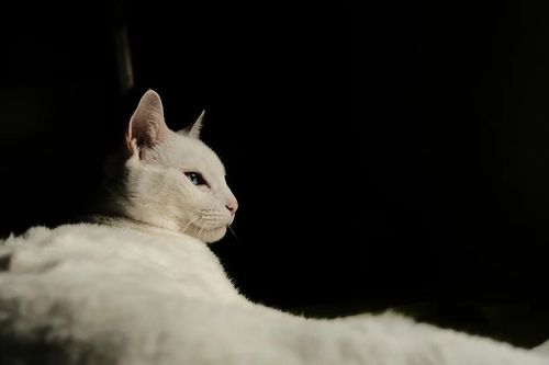 cat-5625168_960_720.jpg