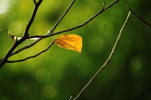 dead-leaves-2679157_960_720.jpg