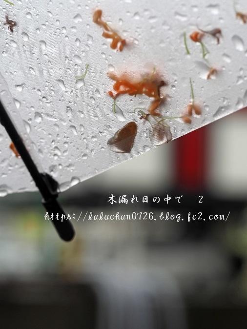 キンモクセイが傘に