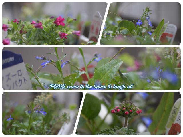 お花さんたち
