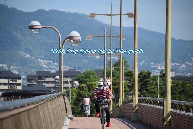 サイクリングに