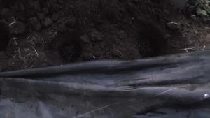 穴を掘りました